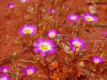 flora-and-fauna